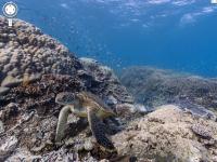 Google推出不用學換氣也可以輕鬆潛入的海底街景