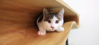 養貓族必備的喵喵「貓桌」