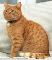 貓咪過世9個月 竟死而復生?!