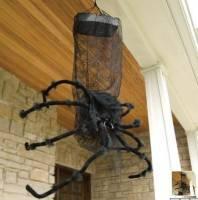 [驚嚇] 萬聖趴的開始就是要有黑蜘蛛助興