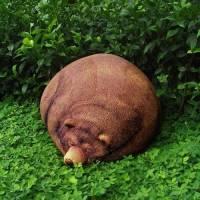 熊出沒!竟大辣辣的睡在我家花園!