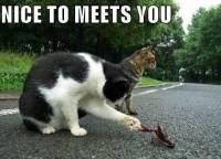 初次見面握個手吧