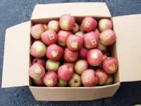 蘋果與apple