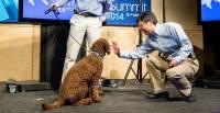 微軟人工智慧技術再進化,「狗」臉辨識功能就位