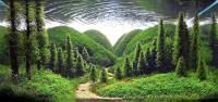 小小水族箱也能有無限大創意-「世界水草造景大賽」