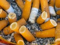 減少環境污染 加拿大試行煙蒂回收再造