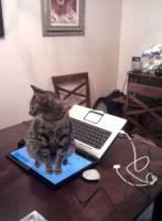有沒有寵物都不想讓主人用電腦上網的八卦?