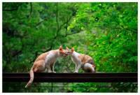 知名攝影師貓夫人作品於日本 Pentax 廣場展出